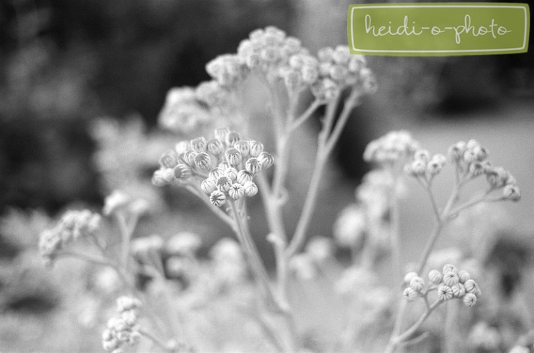black and white garden photography